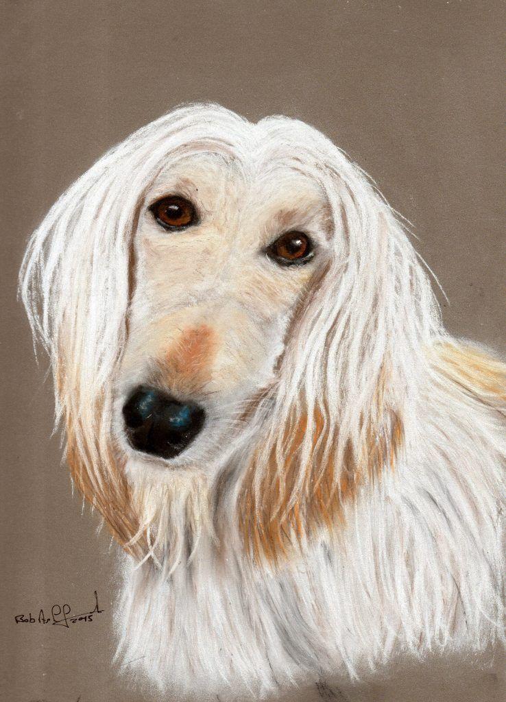 Afgan Hound Pastel Pets Portrait