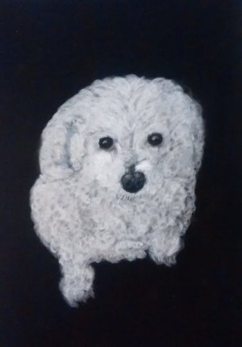 Bichon Dog Pastel Portrait Commission
