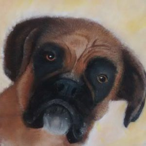 Boxer Dog in Pastels