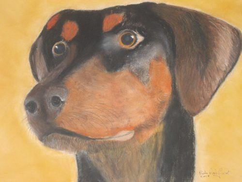 Doberman Dog Pastel Portrait Commission