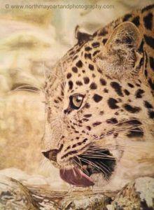 Roz's Leopard Sketch