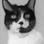 Cat Pastel Portrait, PetsPortraits4u