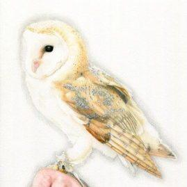 Conscious Crafties - Limited Edition print of original coloured pencil drawing 'Barn Owl'
