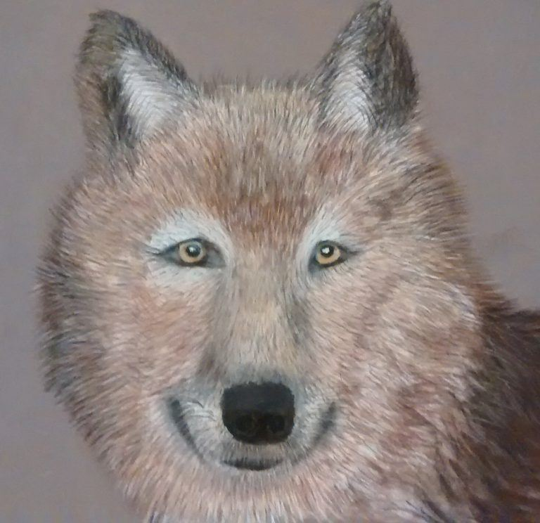 Brown Wolf drawing painting