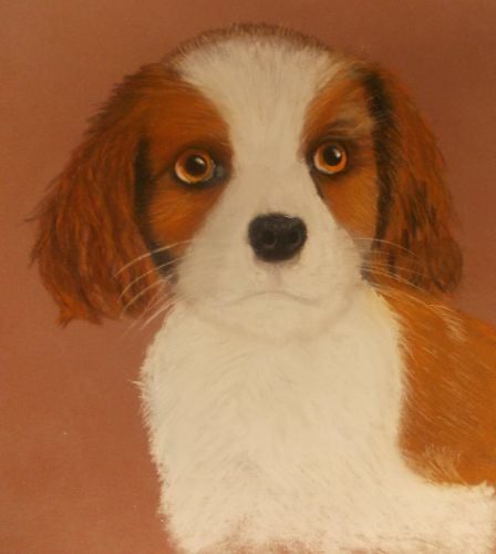 Cavalier dog portrait sketch drawing