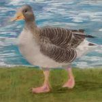 Greylag Duck pastels drawing portrait picture