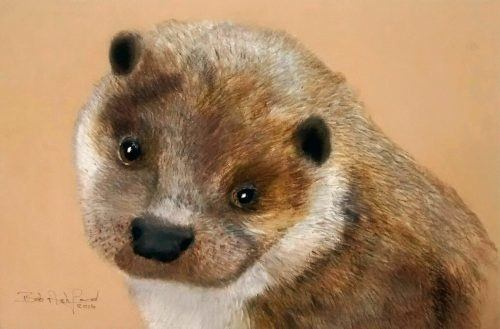 Otter drawing painting