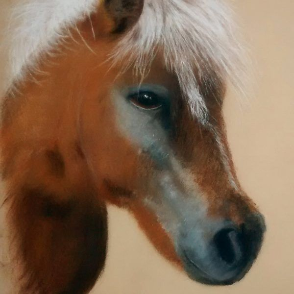 Custom Pastel Pet Horse Portrait Commissions
