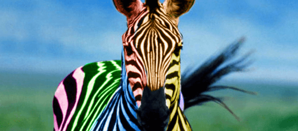 The real me EDS zebra Ehlers-Danlos Syndrome Blog