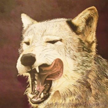 Hungry Wolf drawing