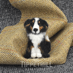 collie sitting – steve@0,5x